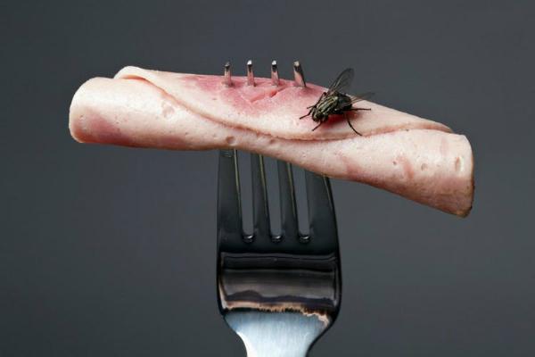 Ruồi mang đến hơn 65 loại bệnh truyền nhiễm khác nhau khi chúng đậu lên đồ ăn. Ảnh: TT